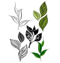 Set from tea shoots and leaves vector