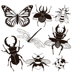 Set insects isolated on a white background vector