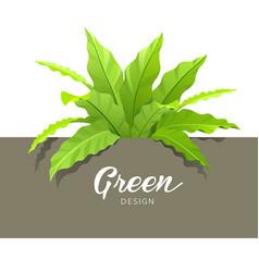 Green asplenium nidus design vector