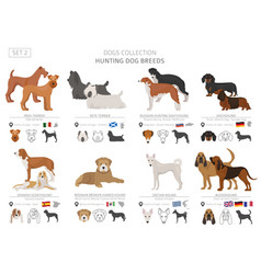 Hunting dogs collection isolated on white flat vector