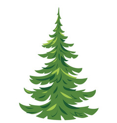 One spruce tree isolated vector