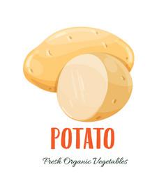 potato vegetable vector image