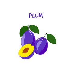 Ripe tasty plum on a white background vector