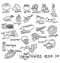 set of vegetables doodles vector image