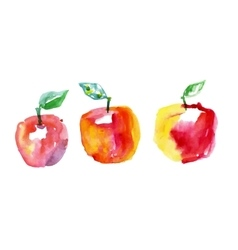 Watercolor drawing apples vector