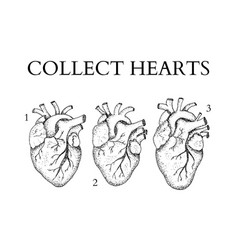 dotwork collect human hearts vector image vector image