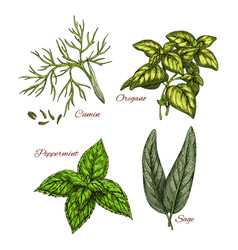 sketch icons of spice and herb dressings vector image