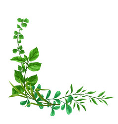 Background sprigs with green leaves vector