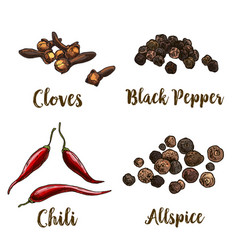 full color realistic sketch of spices vector image
