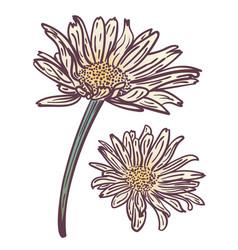 Grunge daisy flower vector