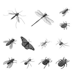 isolated object small and animal symbol set of vector image