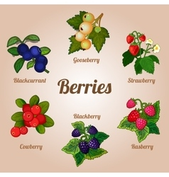 Set of delicious berries of various kinds vector