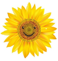 Smiling Sunflower vector image