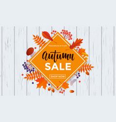 autumn sale poster banner maple leaf vector image