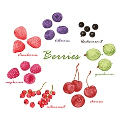 Set of colored hand draw graphic berries vector image