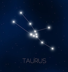 Taurus constellation in night sky vector