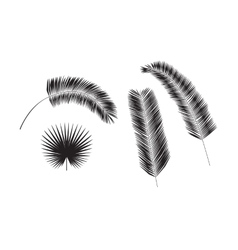 Set of palm tree leaves silhouettes isolated on vector image vector image