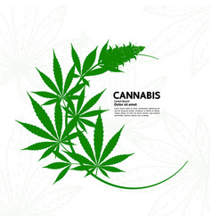 Cannabis plant vector