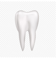 tooth on transparent background vector image vector image