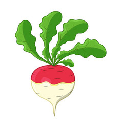 turnip cartoon icon design isolated on white vector image