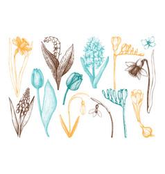 botanical of springtime plants vector image vector image
