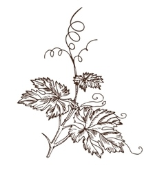 Grape leaves in the style of a sketch vector image