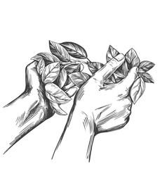 Award laurel wreath in hands hand drawn vector