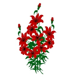 Bouquet of red lilies vector image