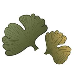 ginkgo biloba leaves vector image