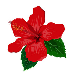 hibiscus flower with leaves flat vector image
