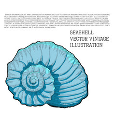 Seashell vintage stylized as hand-drawn sketch vector