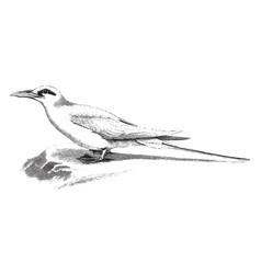 Tropic bird sitting on a ledge vintage vector