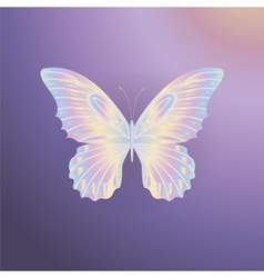 Pearl Lace butterfly on purple background vector