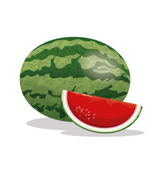 watermelon fruit fresh harvest vector image
