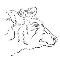 Bull vintage vector