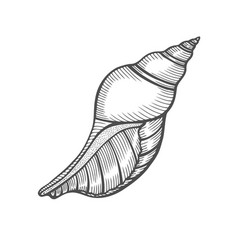 seashell nautilus sea shell vector image