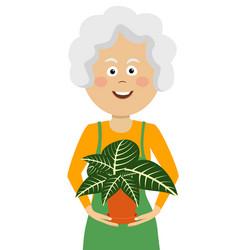 elderly gardener woman holding flower in pot vector image vector image
