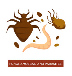 fungi amoebas and parasite infection and disease vector image