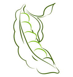 peas drawing on white background vector image