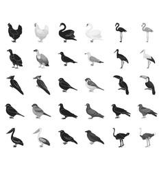 types of birds blackmonochrome icons in set vector image