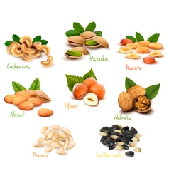 mega collection of colorful nuts vector image vector image