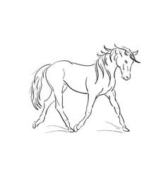 sketch of running horse vector image