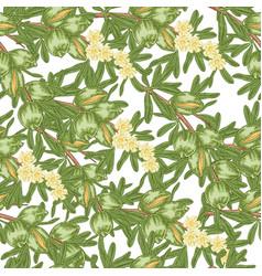 Argan tree argania seamless patern green nuts vector