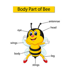 Diagram showing body part bee vector