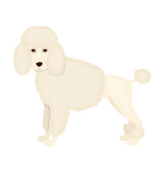 Poodle single icon in cartoon stylepoodle vector