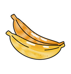 Banana fruit food vector