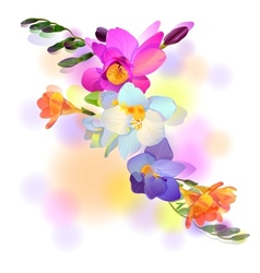 Greeting card with gentle freesia flowers vector image