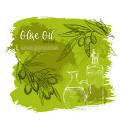 olives and olive oil poster sketch vector image