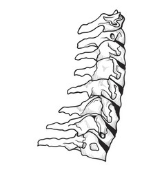 spine icon skeletal orthopedic and spinal vector image