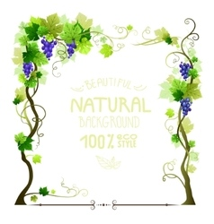 Blue ripe vineyard frame vector image